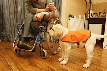"""z Zulą Przybylińską, wiceprezes Fundacji ALARIS """"Psy dla niepełnosprawnych"""", rozmawia Magdalena Kowarzyk"""